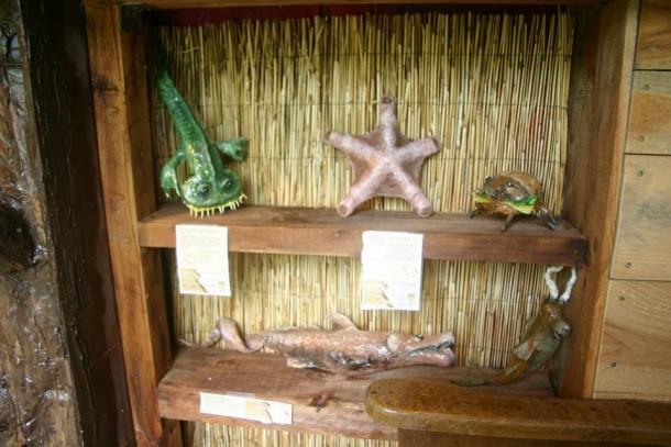 Peigne des marais, mano aquatica, coccheese, pigshark et anticampe.