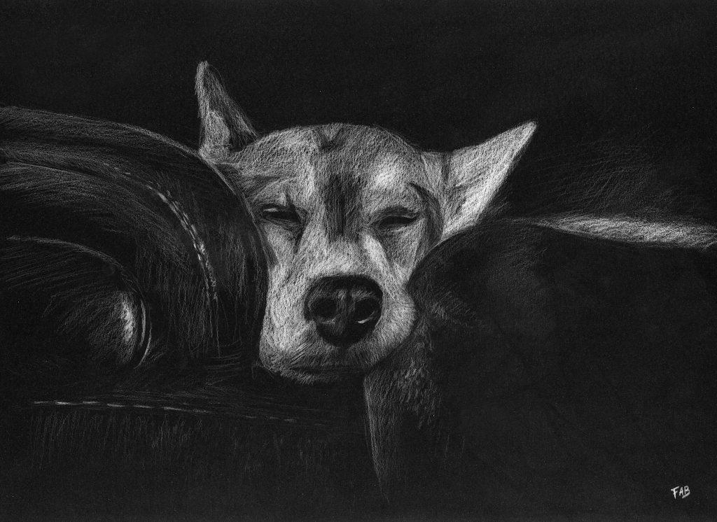 Chien sur canapé dessin Hushky
