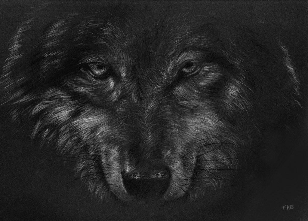 Loup dessin