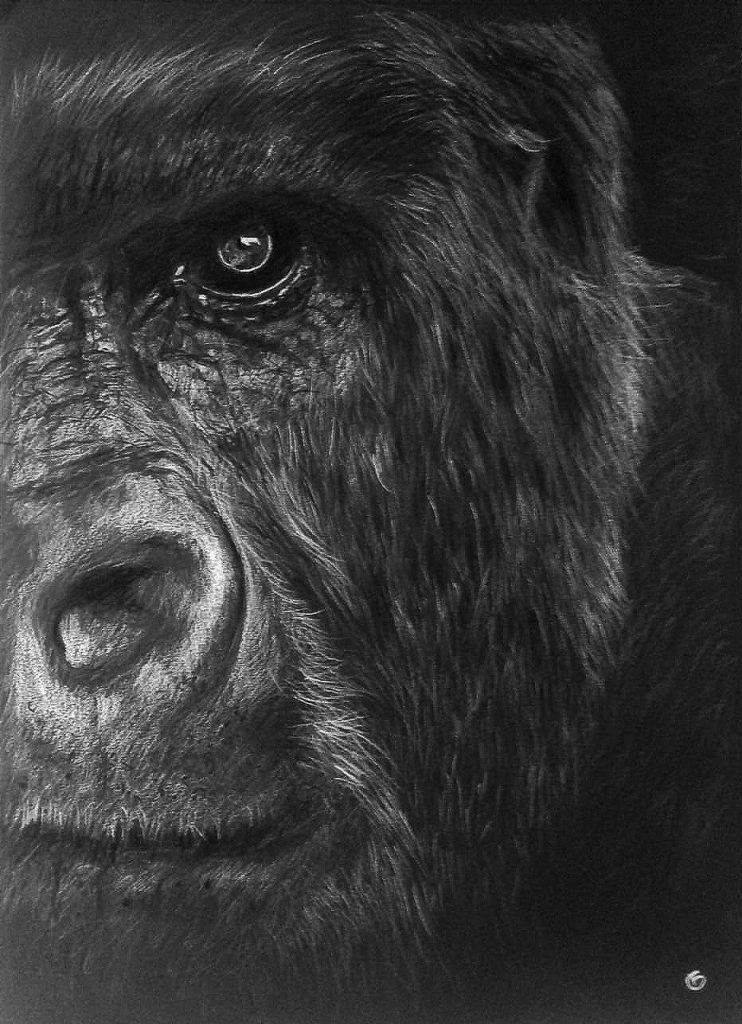 Gorille dessin portrait pastels secs